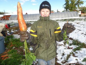 Das ist keine Fotomontage! Alexander half bei der Karotten Ernte
