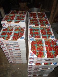 Erdbeeren, Erdbeeren, Erdbeeren... Lecker!